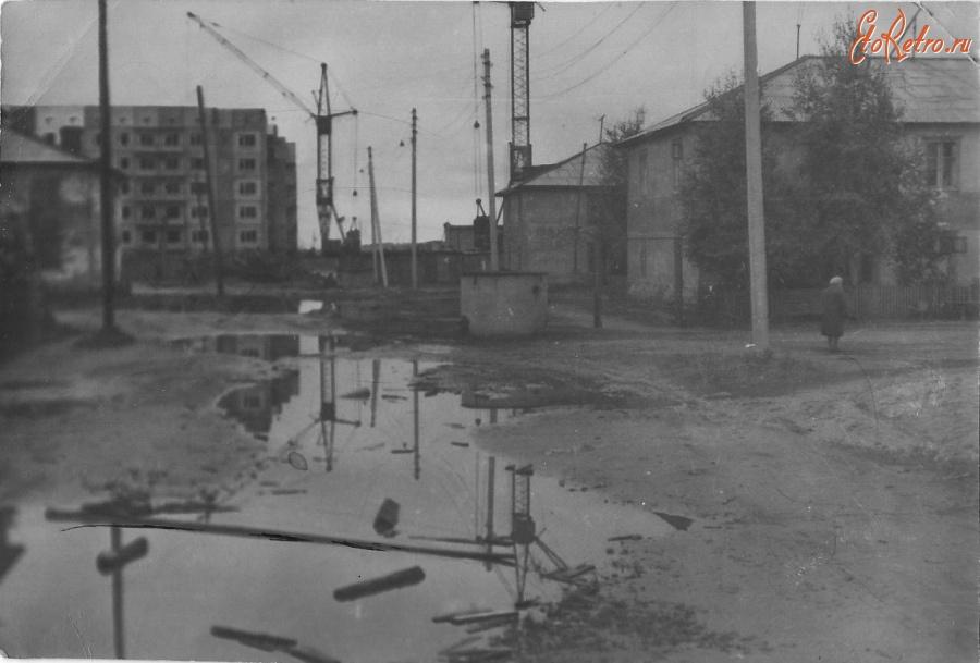 архивные фотографии сургутского района кедровая сосна