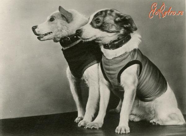 Собаки белка и стрелка после полета в