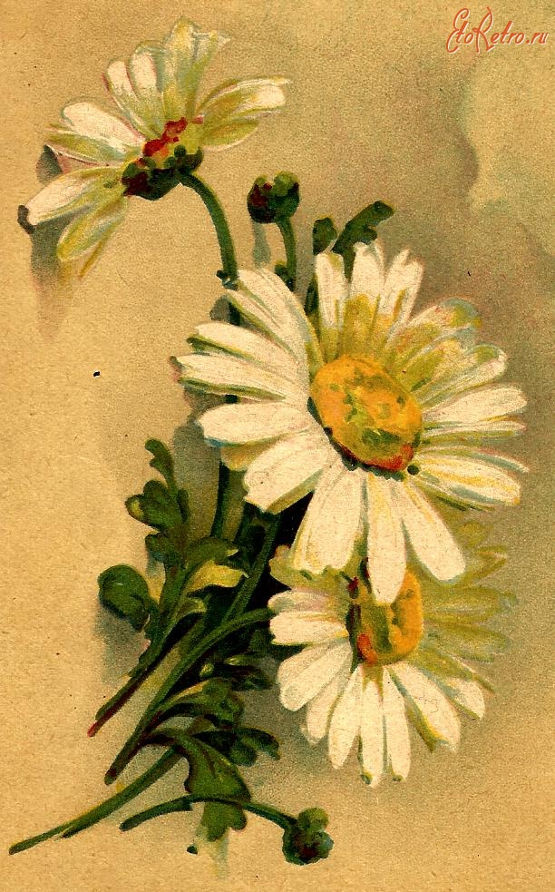 Открытки ретро с цветами