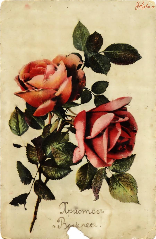 Цветов открытка, розы на старых открытках