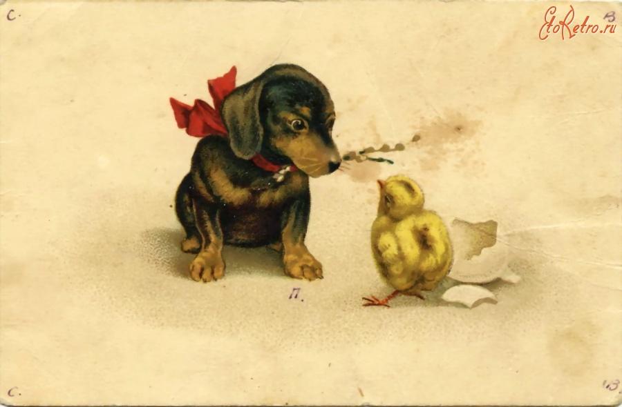 Фото открытка с днем рождения с животными