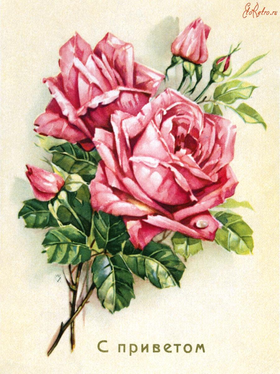 Маленькие открытки с розами