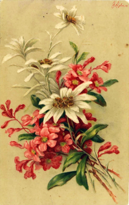 сыграл роль старинные открытки фото цветы такую петельку можно