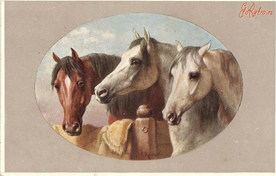 Лошади на старинных открытках, солнышко проснулось тату