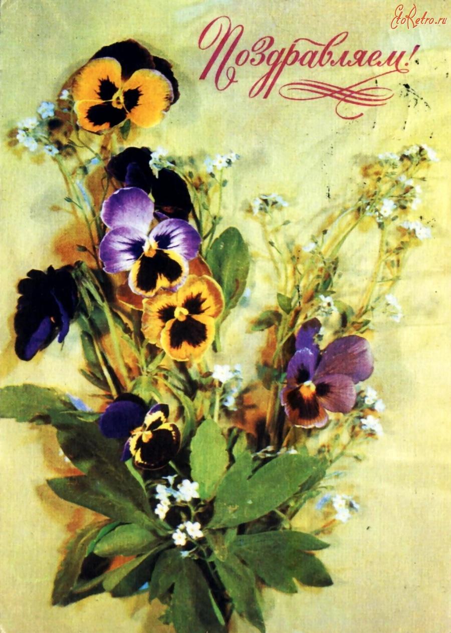 Анютины глазки открытки 86