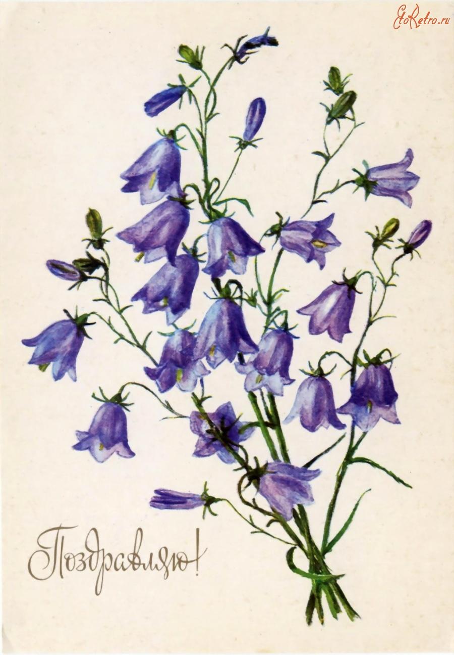 Колокольчики цветы открытки 64
