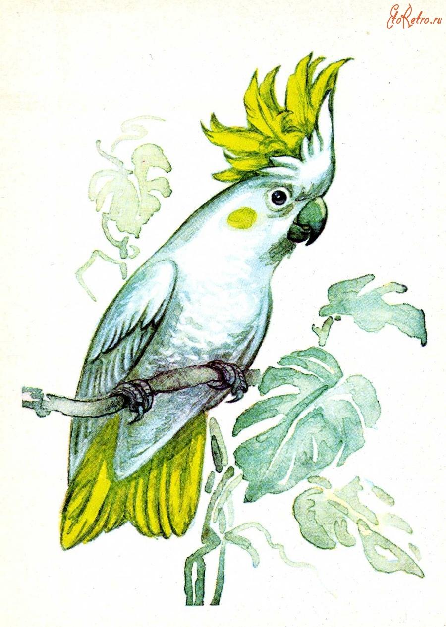 Попугай открытка