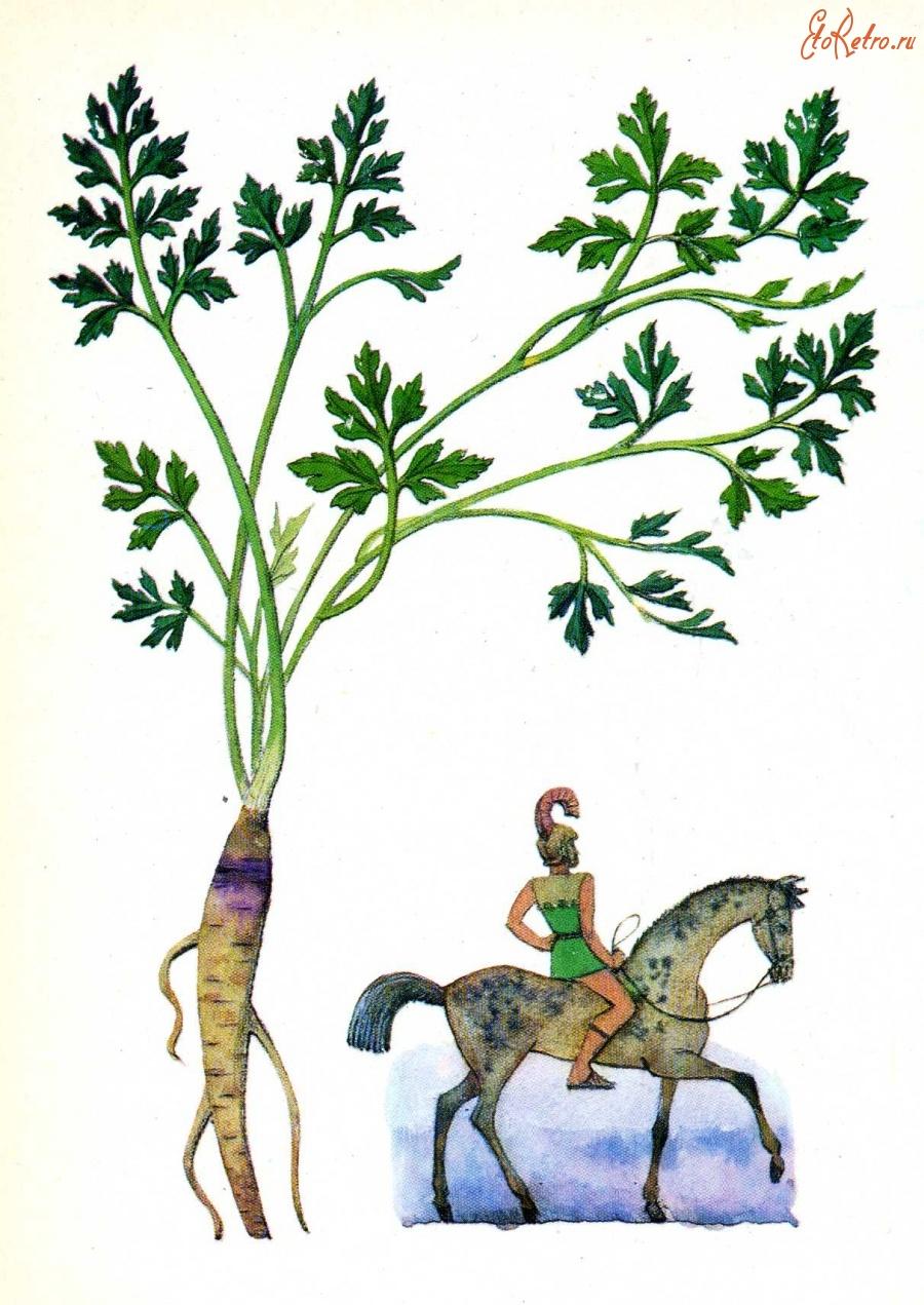 открытка с петрушкой