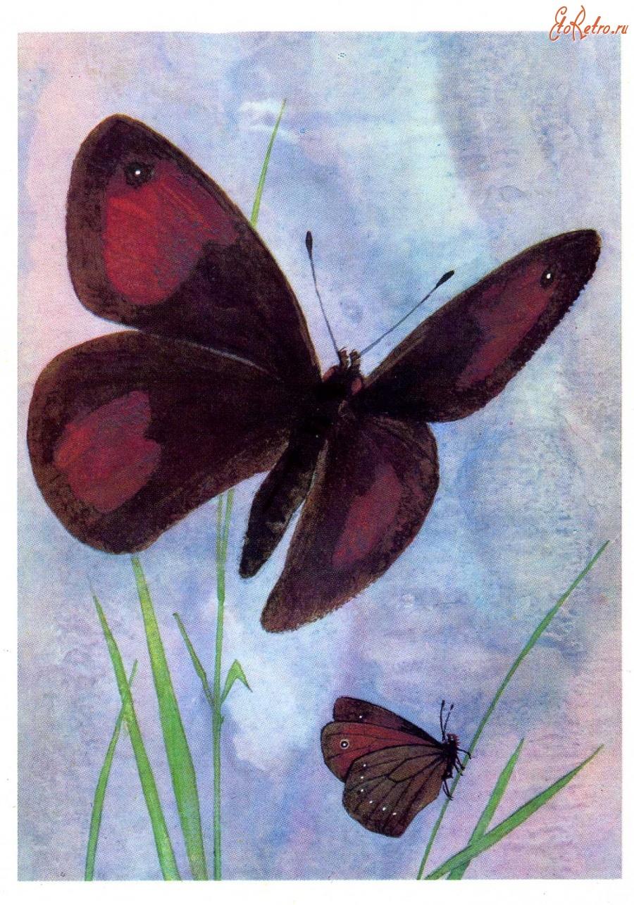 Советские открытки бабочки