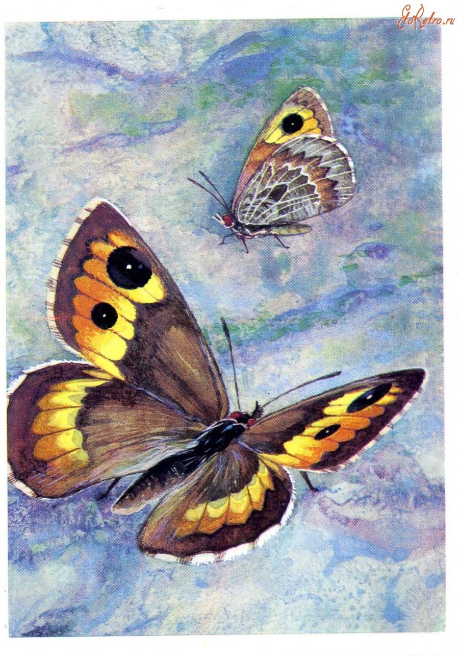 Марта прикольные, советские открытки бабочки