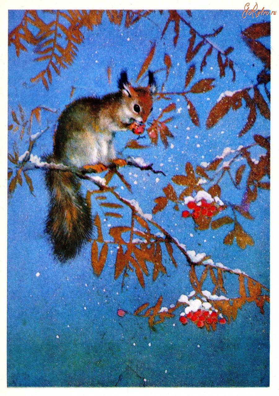 Международному дню, советские открытки природа