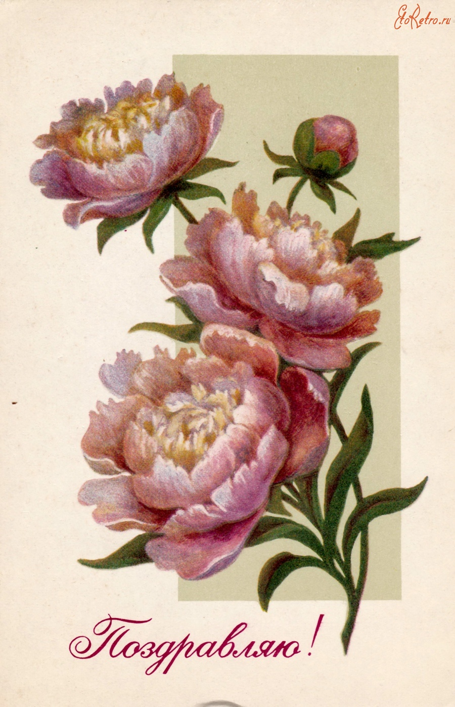 Ретро открытки пионы, картинки дню
