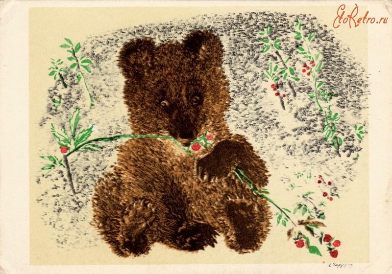 или иллюстрации к рассказам чарушина медвежонок актуальных