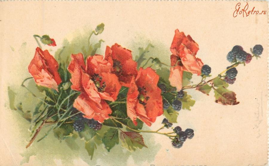 Маки на картинах открытках