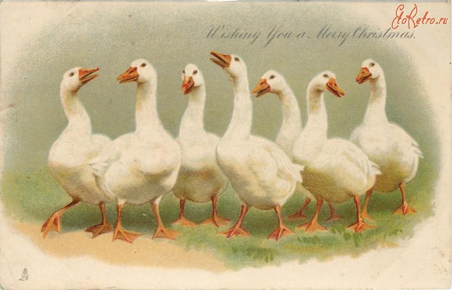 масштабной линейкой старые открытки утки найти самые