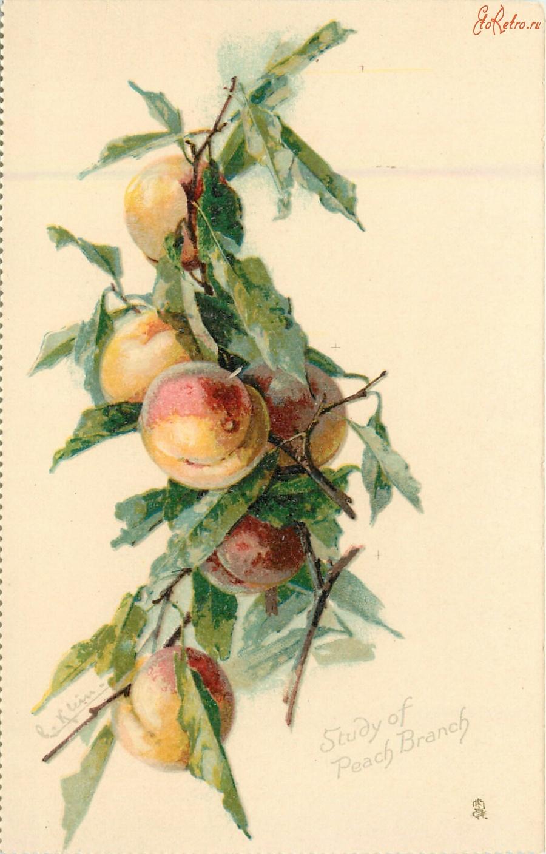 Открытки с персиками