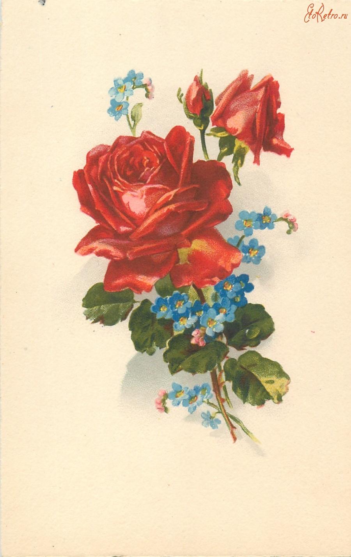 Лучшей подруге, роза старые открытки