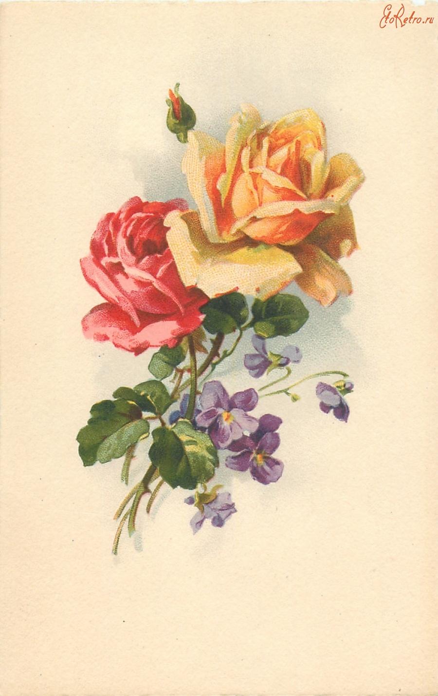 Розы на старых открытках