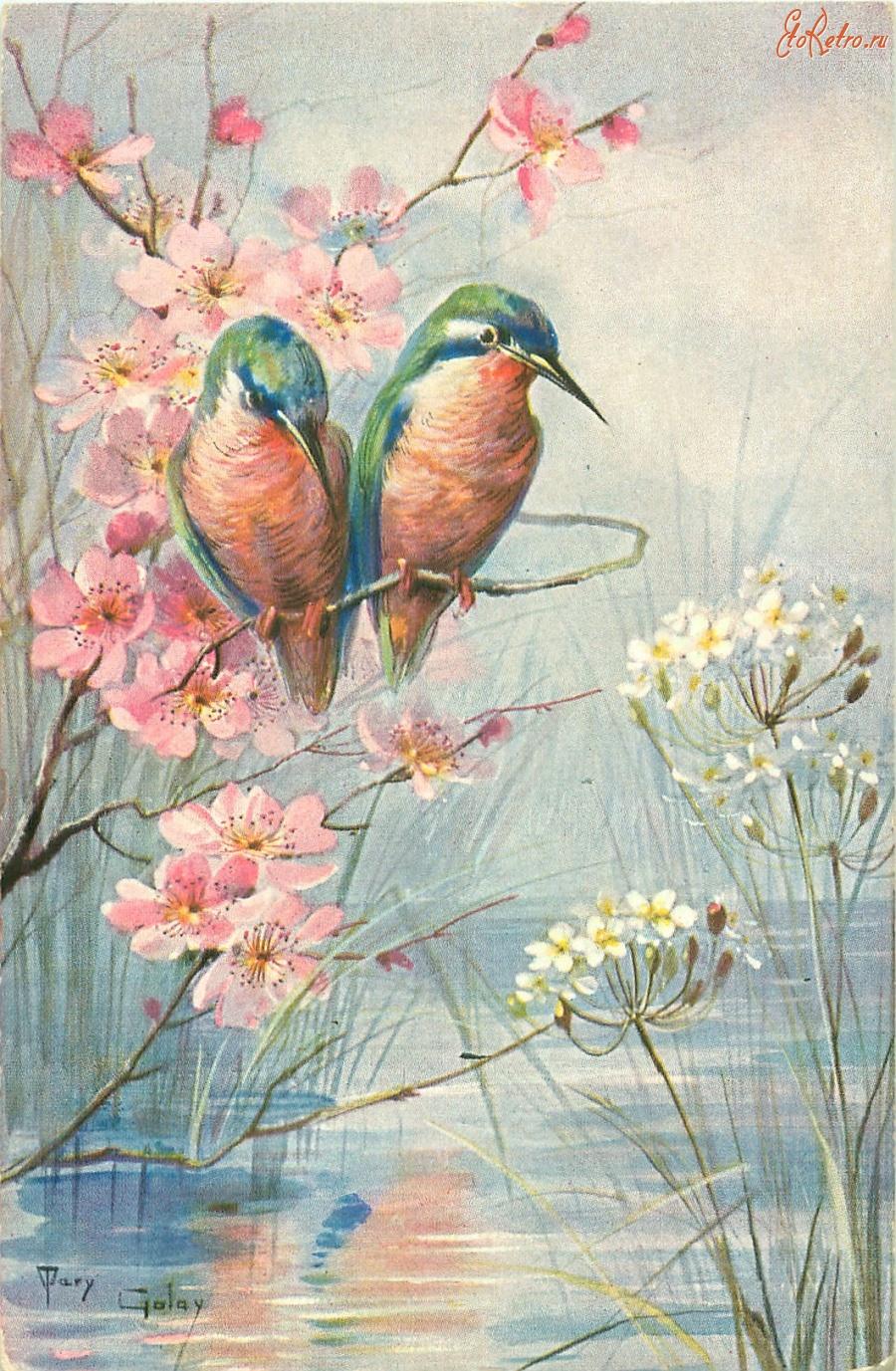 Птицы на открытках, летием