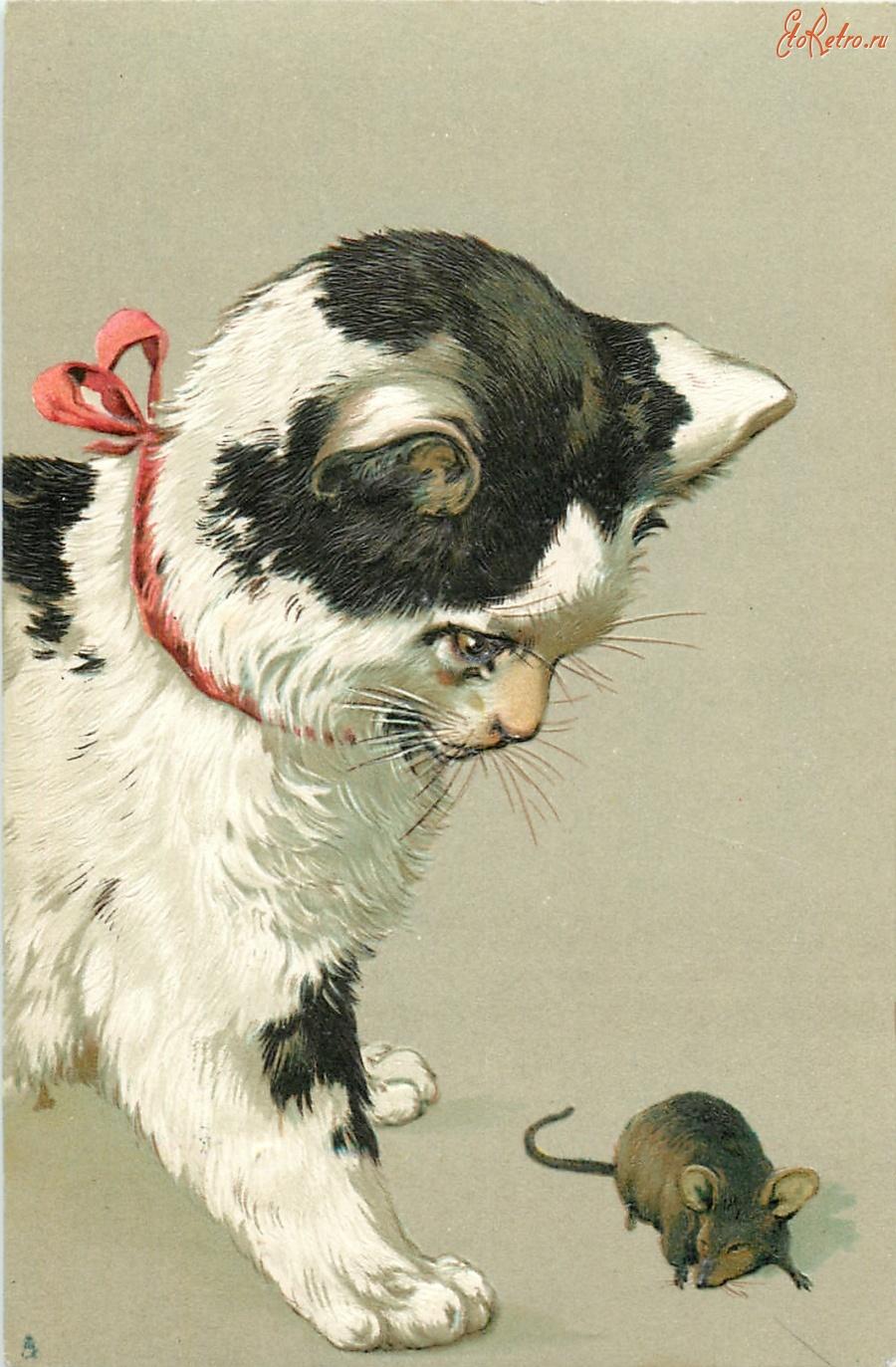 Открытка с мышкой и кошкой, юбилеем нарисовать