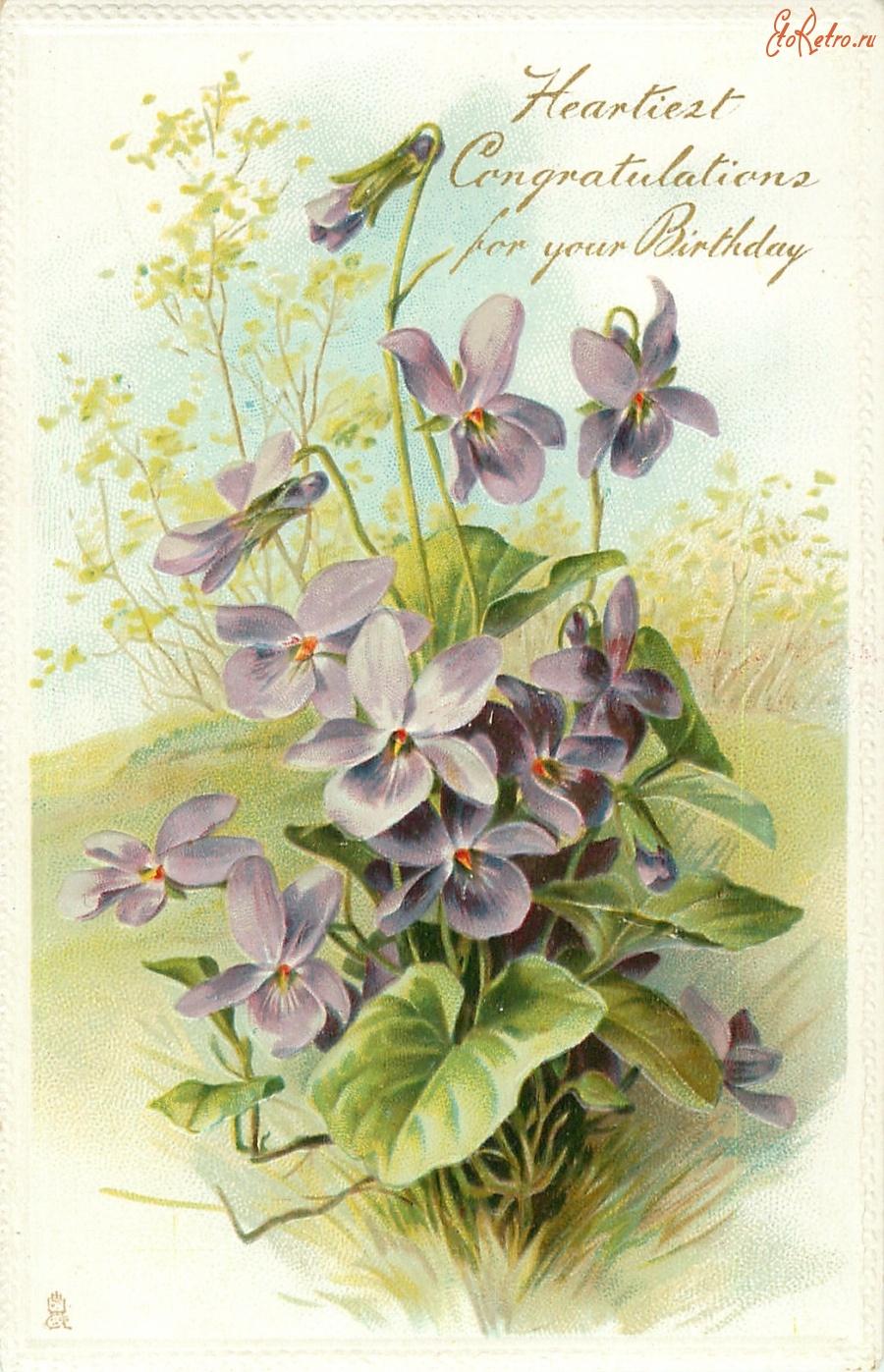 Открытки фиалки с днем рождения, картинки единорога цветы
