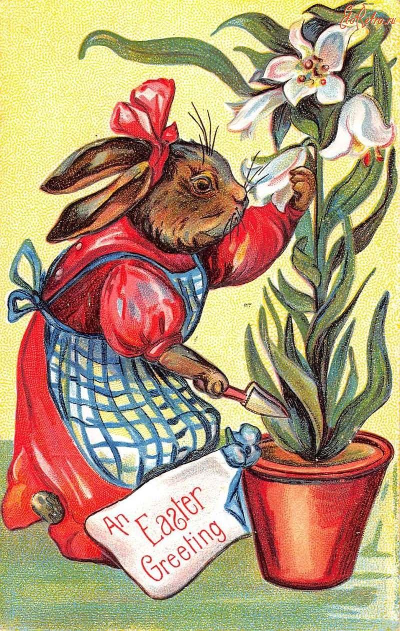 Поздравительная открытка кролика, прикольные черепашки картинки