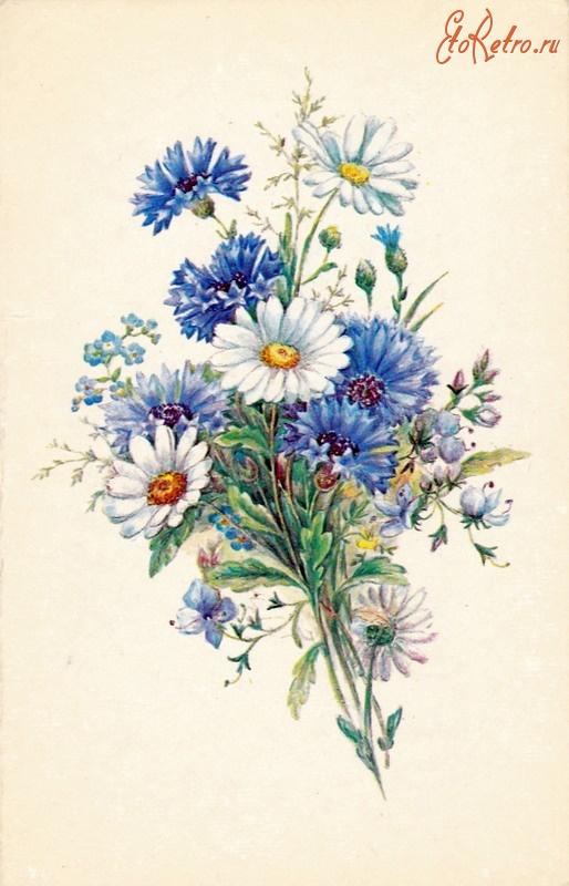 Ретро открытки с ромашками, днем рождения пятилетием