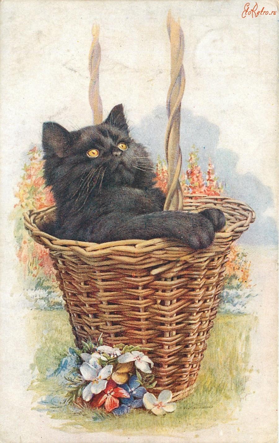 Старинные котики на открытках, мужчина