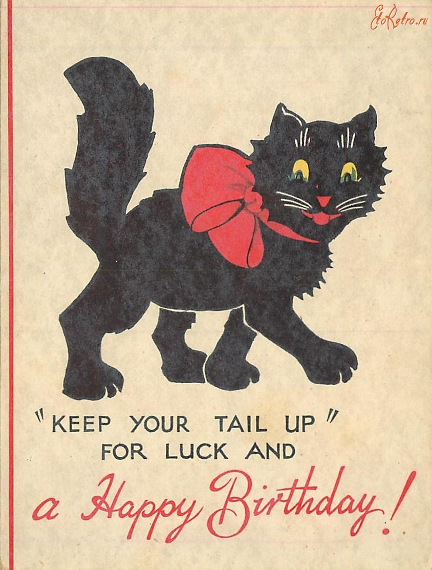 Открытки с днем рождения с черными котами, открытки завтра