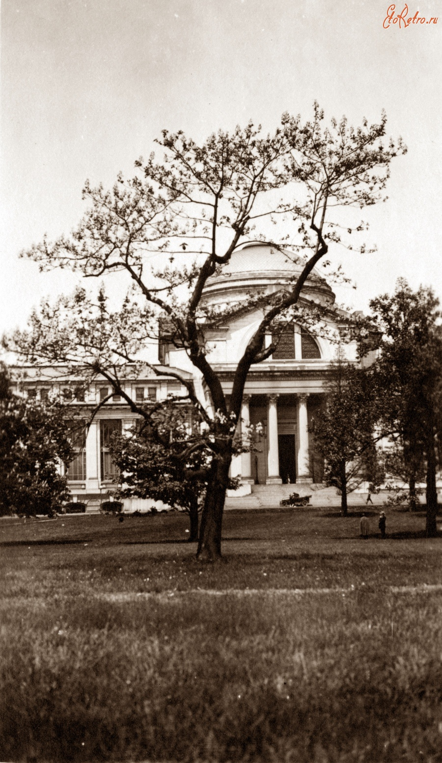 Вашингтон - Tree in front of the United States National Museum (now the National Museum of Natural History) США , Вашингтон (округ Колумбия)