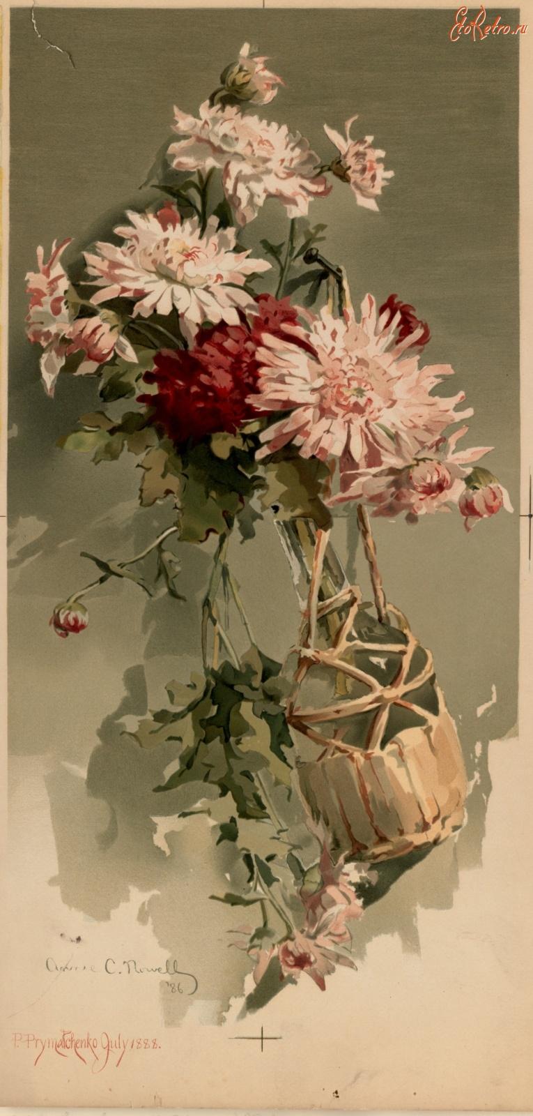 Картинки, фото старые открытки с цветами